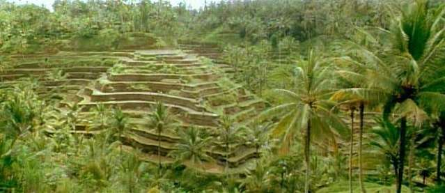 Rice Fields outside Ubud, Bali