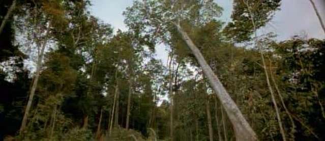 Brazillian Rain Forest