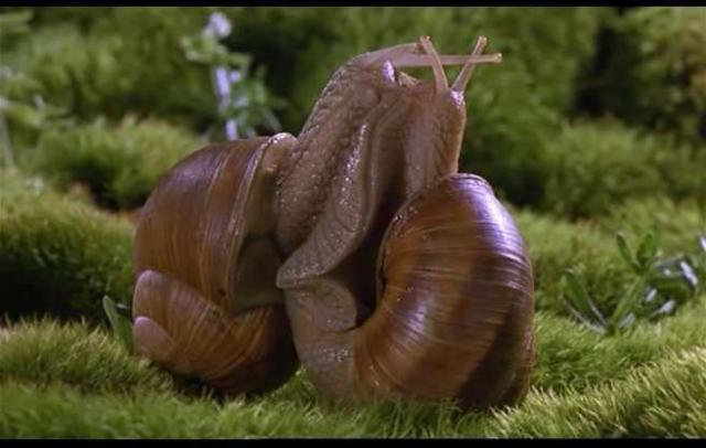 Two slugs mating