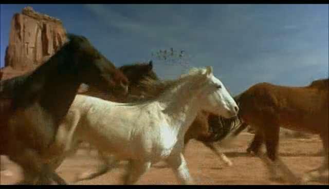 Wild Horses USA