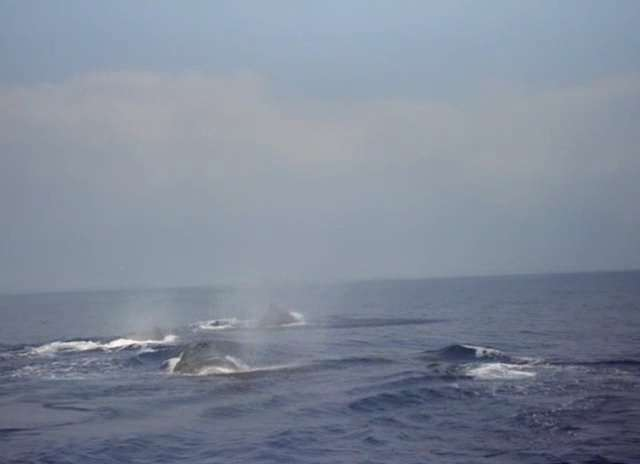 Whales taking in air